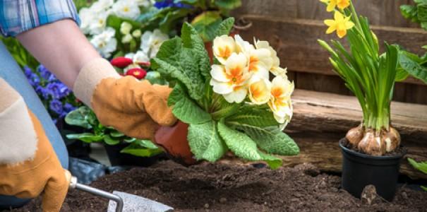 Нельзя сажать цветы дома 935