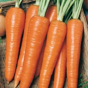 Морковь гранулир. Роте Ризен