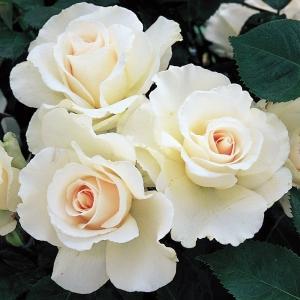 Роза Маргарет Меррил