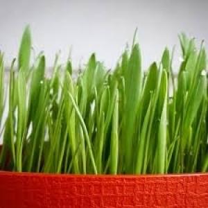 Трава для хомячков Пушистик