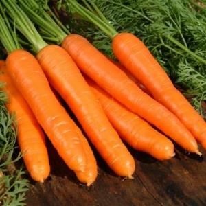 Морковь Флакке Королева Осени