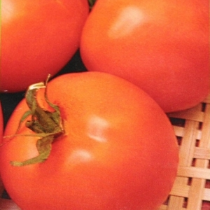 Томат Оранж 1