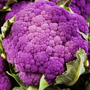 Капуста цветная Пурпурная