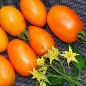 Томат Банан, оранжевый