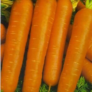 Морковь Настена (серия Русский вкус)