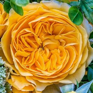 Роза Инка