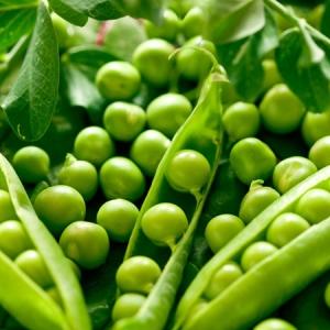 Горох Прометей овощной