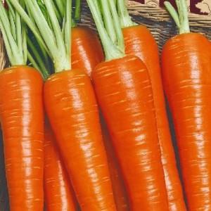 Морковь Нежная (серия Ленивый огород)