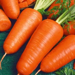 Морковь на ленте Шантенэ 2461