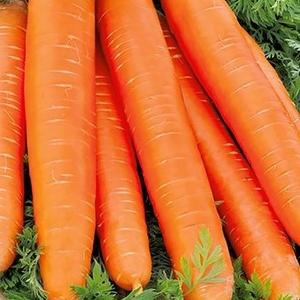 Морковь Длинная красная без сердцевины стол