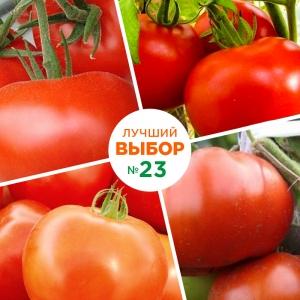 Крупноплодные сорта томата для закрытого грунта