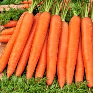Морковь Ромоса