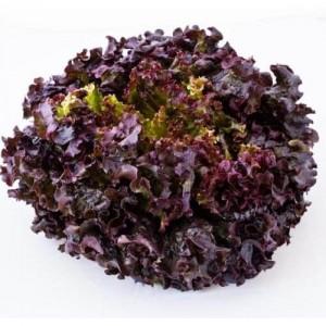 Салат листовой Дубовый лист красный