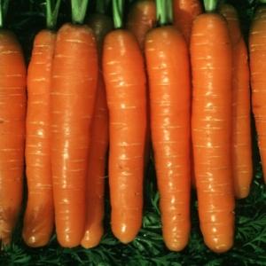 Морковь Наоми