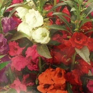 Заказать почтой цветы, гардения букет купить киев