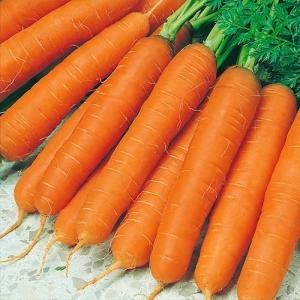 Морковь Юлиана F1 столовая