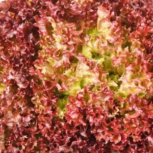 Салат Кантри листовой