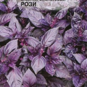 Базилик Рози, фиолетовый