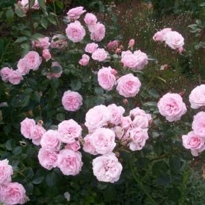 Роза Октавиа Хилл