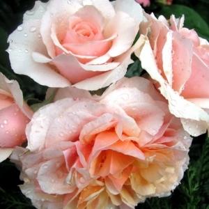 Роза Ксавьер де Фраиссинетте