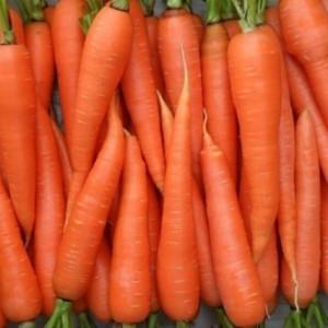 Морковь Алтаир F1