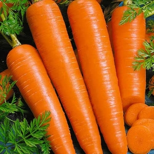 Морковь Вита лонга столовая