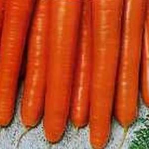 Морковь гранулир. Амстердамска