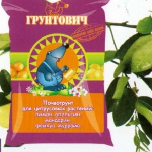 Почвогрунт для цитрусовых растений