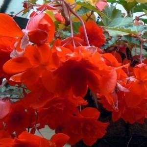 Купить семена комнатных растений почтой беларусь, цветы роз плетистых купить в алматы