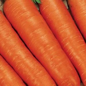 Морковь Топаз F1