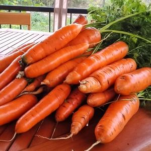 Морковь Монастырская (сер. Русский вкус)