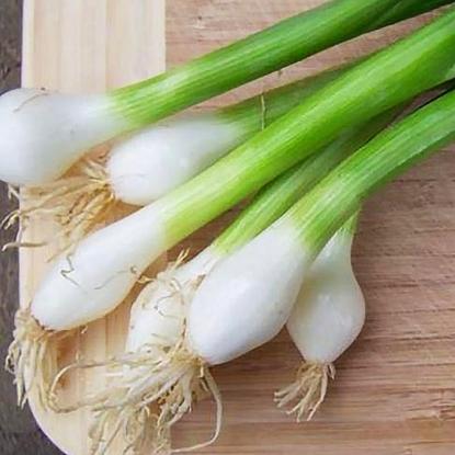 Лук на зелень Белое перо