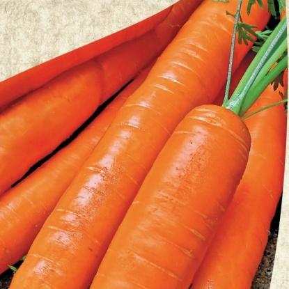 Морковь Натофи столовая