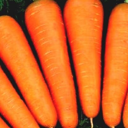 Морковь Балтимор F1 столовая