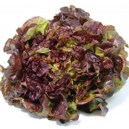 Салат Дубовый лист красный листовой