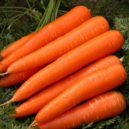 Морковь Император столовая