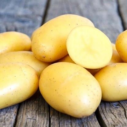 Картофель семенной Ривьера
