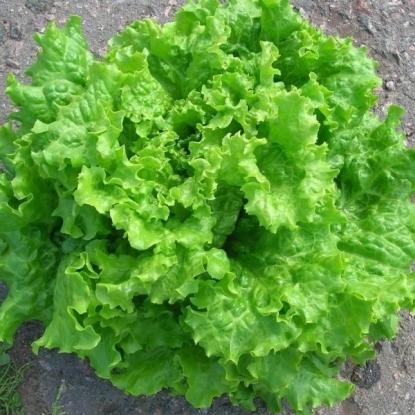 Салат Орфей, хрустящий зеленый