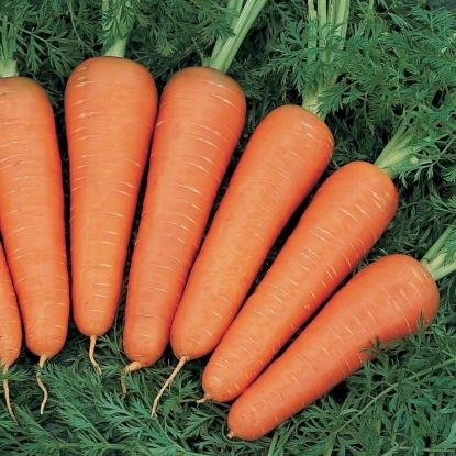 Морковь Канада F1 столовая