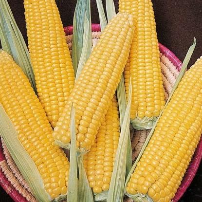 Кукуруза Сахарный початок (серия Русский вкус)