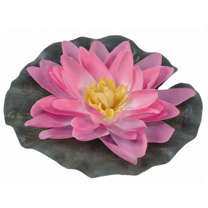 Лилия водяная, розовая