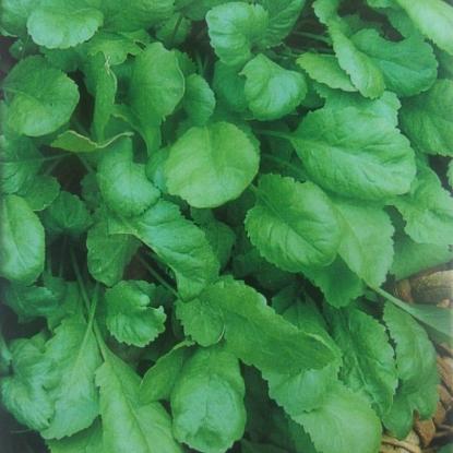 Кресс-салат Дукат (сер. Урожай на окне)
