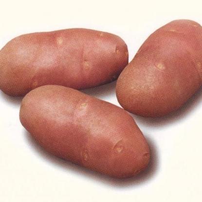 Картофель семенной Рэд Скарлетт
