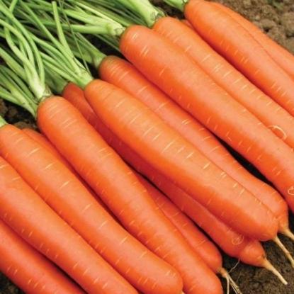 Морковь Бабушкин припас