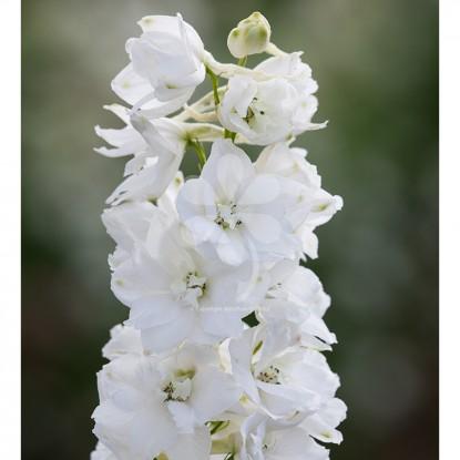 Цветов заказать каталог цветы по почте в беларуси доставка цветов через