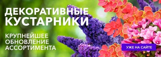 Новинки кустарников уже на сайте!