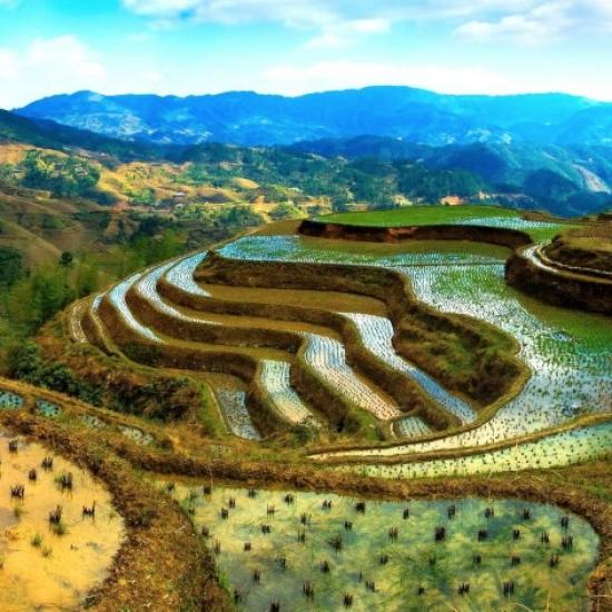 Фото выращивание риса в испании
