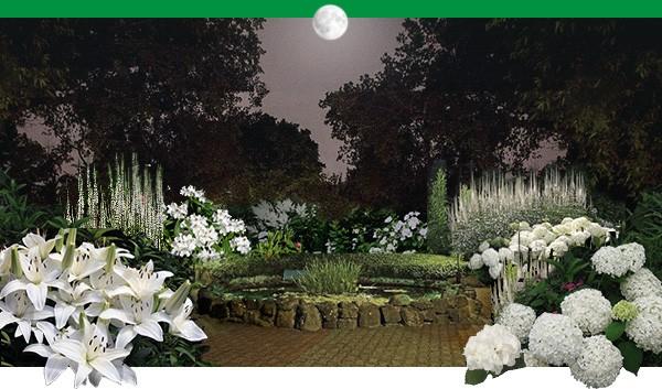 Романтика ночного сада