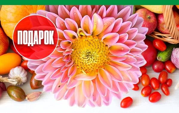 Цветы уже на сайте
