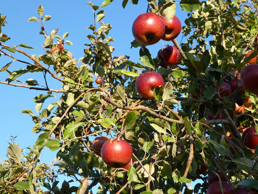 Сбор урожая октябрь
